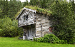 Rebuild historic house in Norway with grass on roo Stock Photo