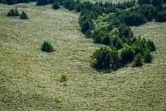 Rebun Forest Course Scenery Imágenes de archivo libres de regalías