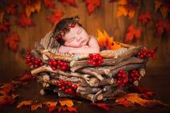 Recém-nascido bonito em uma grinalda dos cones e das bagas em um ninho de madeira com folhas de outono imagem de stock royalty free