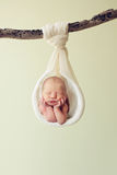 Recém-nascido e um ramo no estúdio fotografia de stock