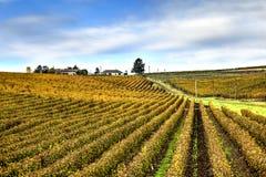 Recas winery, Romania stock photos