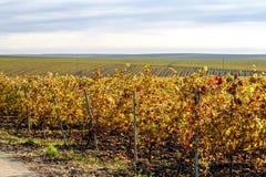 Recas winery, Romania royalty free stock image