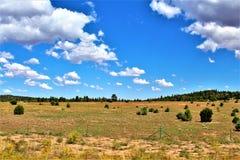Recaudador de fondos en Arizona septentrional, Estados Unidos del paseo de la reunión de la libertad de los posts 86 de la legión imágenes de archivo libres de regalías