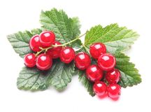 Recd currant. Red currant and leaves on white background stock photo