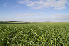 Receding into the distance field with green grass Royalty Free Stock Image