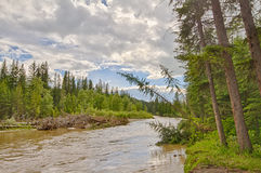 Receding Water of the Calgary Flood Royalty Free Stock Photography