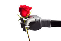 Receiving rose from artificial hand Royalty Free Stock Photo