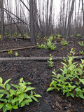 Recent burn of boreal forest Stock Images