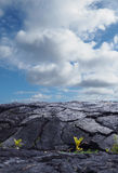Recent Lava Flows on the Hawaiian Islands Royalty Free Stock Images