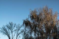 Recente Dalingskleuren met blauwe hemel Stock Foto