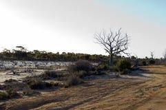 Recente middag bij Magisch Meer, Hyden, WA, Australië royalty-vrije stock fotografie