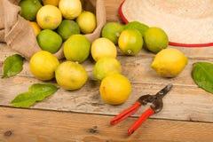 Recentemente do limão vida ainda Fotos de Stock Royalty Free