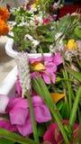 Recentemente flor de corte do jardim pronto para arranjar imagem de stock royalty free