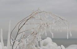 Recentemente ghiaccio ricoperto Fotografie Stock Libere da Diritti
