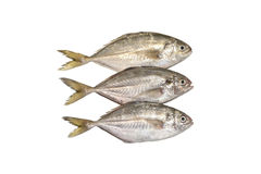 Recentemente peixes no branco Foto de Stock Royalty Free