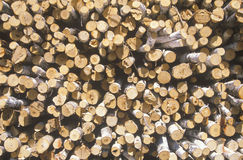 Recently cut logs Stock Images