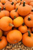 Orange pumpkins in pile. Recently harvested orange pumpkins in a random pile Royalty Free Stock Photos