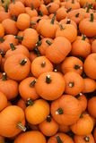 Orange pumpkins in pile. Recently harvested orange pumpkins in a random pile Royalty Free Stock Photography