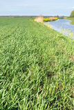 Recently sown wheat beside a river Royalty Free Stock Photo