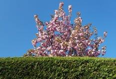 Recepción a la primavera Imagen de archivo