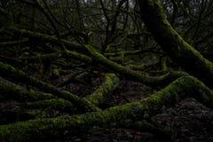 Recepción a la selva foto de archivo libre de regalías