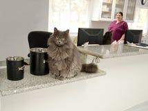 Receptionist del gatto Fotografia Stock Libera da Diritti
