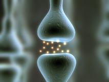 receptor Arkivfoto