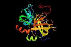 Receptor för koaguleringfaktor II, ett protein som är involverat i regulaen Royaltyfria Foton