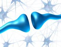 Receptors da sinapse e do neurônio Imagens de Stock Royalty Free