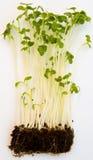Recessie: Groene spruiten van terugwinning. Stock Foto's
