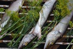 Recetas de la tradición del ahumadero del humo del lucio de los pescados Imagenes de archivo