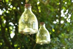 Receveur en verre de guêpe Photographie stock