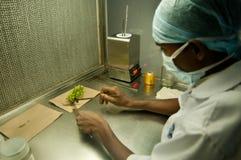 Recherche agronomique Photo stock