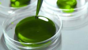 Recherche chimique dans la boîte de Pétri Pipette de laboratoire avec le liquide vert banque de vidéos