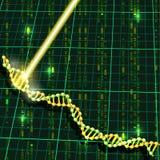Recherche d'ADN Photographie stock