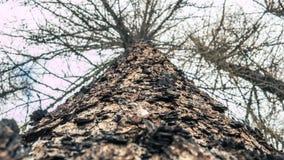 Recherche d'un arbre pendant un matin froid d'hiver photographie stock libre de droits