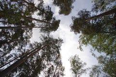 Recherche dans la forêt Images stock