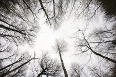 Recherche dans la forêt dans la chute Paysage gris d'automne de jour dans W Image libre de droits