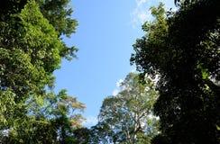Recherche dans le ciel par la forêt Photographie stock libre de droits