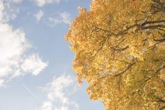 Recherche dans le ciel dans un jour d'automne et un arbre avec les feuilles jaunes Photographie stock libre de droits