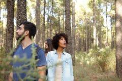 Recherche dans les arbres dans la forêt Image libre de droits