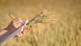 Recherche de données d'écriture de main de femme des oreilles de blé dans le domaine La science d'agriculture