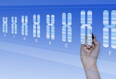 Recherche de la génétique de chromosome photographie stock