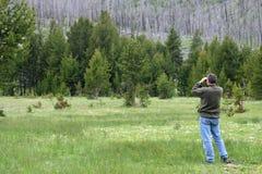 Recherche des bois Image libre de droits