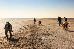 Recherche des coquilles sur le banc de sable en l$mer des Wadden, la Hollande Photographie stock