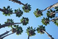 Recherche du palmier Image libre de droits