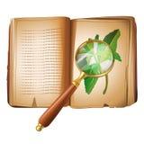 Recherche en matière de botanique Photos stock