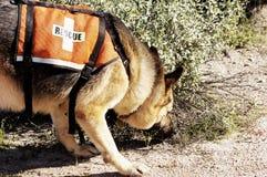 Recherche-Hund Stockfotografie