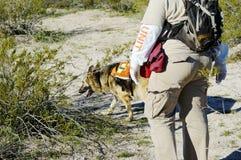 Recherche-Hund Lizenzfreie Stockfotografie