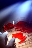 Recherche légale d'inspection dans le laboratoire de crime Images stock